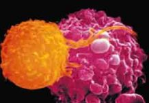 supresor tumores