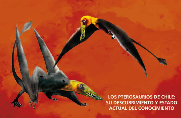 Pterosaurios: el más antiguo y el de mayor tamaño de los reptiles viladores identificados en Chile