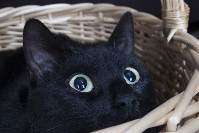 El Manejo del Estrés de las Mascotas para una Tenencia Responsable